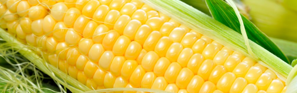 AKEFEMA requests yellow maize importation to boost feed production